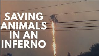 Animal Hope and Wellness Saves 150 Animals in California Inferno!