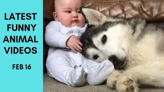 FUNNY Animals Moments of the Day -- Feb 16