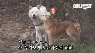 산 속에 숨어사는 누렁이에게 백구는요 ㅣDog Hiding In The Mountain Only Chases After A White Dog, Because