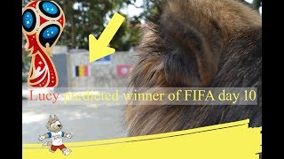 FIFA 2018- Lucy the Prediction GERMAN SHEPHERD DOG ,  FIFA 2018 Russia , GERMANY vs SWEDEN