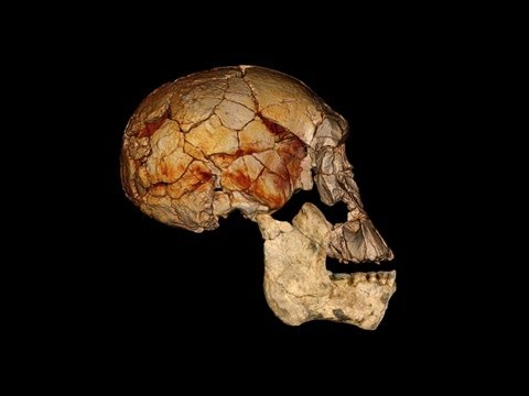 Science Bulletins: Discovering Diversity in our Early Ancestors