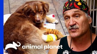 Car Accident Leaves Dog With Untreatable Injuries | Dr. Jeff: Rocky Mountain Vet