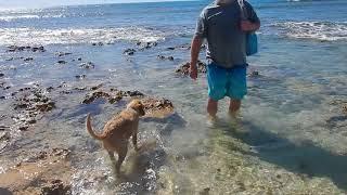 dogs playing at avalon beach mandurah