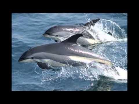 Лагерные песни - Дельфиненок