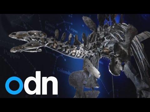 World's most complete Stegosaurus specimen goes on display in London