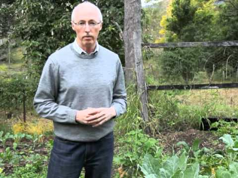 Tips on vegetable garden design