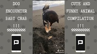 Dog First Encounter With Baby Crab | NEW Funny and cute Animal-Compilation | 2018 P.4