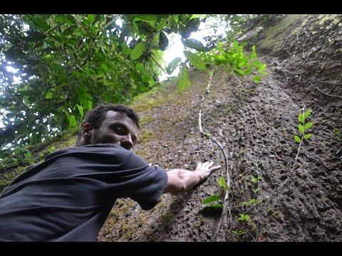 GREEN LIFE PROJECT - Gunung Leuser, Sumatra (2015)