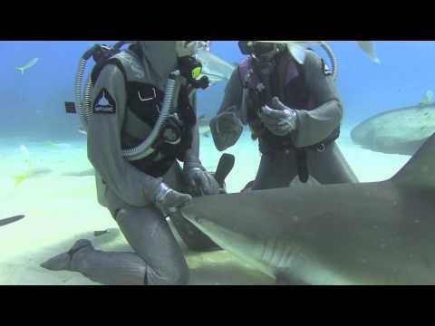 Szirti cápák - Reef Sharks