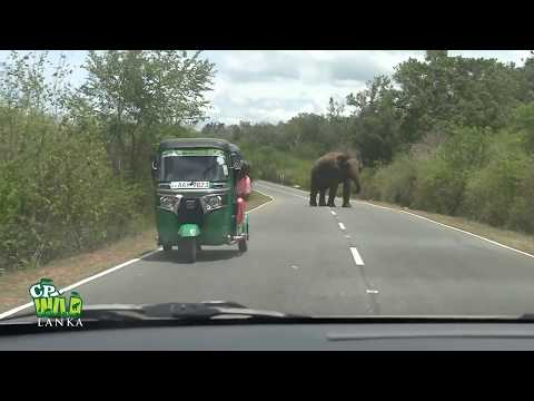 Amazing, video, elefant ----huge super video