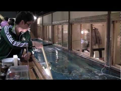 The Japanese Restaurant Where You Catch Your Own Fish [TofuguTV]