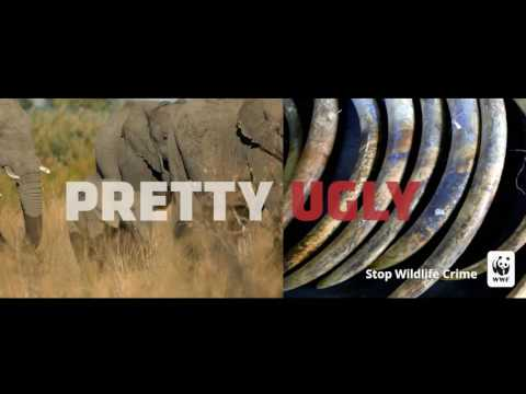 Pretty Ugly: Wildlife Crime