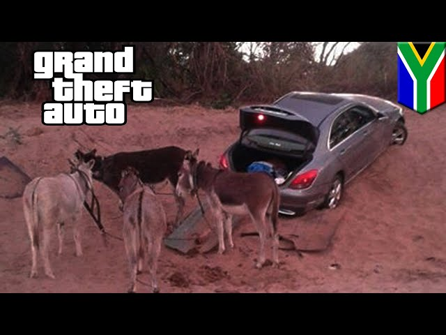 GTA fails: Donkeys caught smuggling stolen car at South Africa-Zimbabwe border - TomoNews