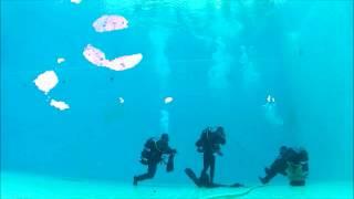 Funny Dive Video
