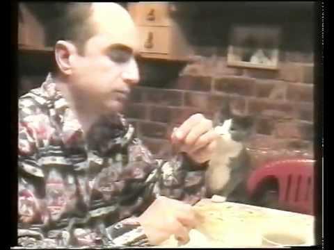 gato usa gestos para pedir comida