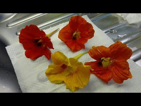Kwiat I Liście Nasturcji W Kuchni Kwiat Jadalny żywność Funkcjonalna