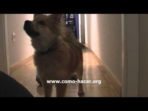 Trucos de perros - Cachorro inteligente con buena memoria