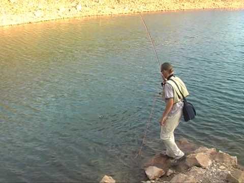 Negozi di pesca online dating