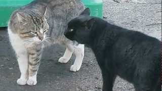 Two male cats in the street talk.The black one says: I`m the best!!!