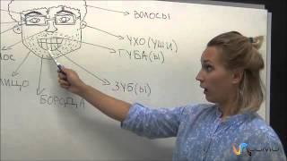 Las partes de la cara en Ruso - Curso de Ruso