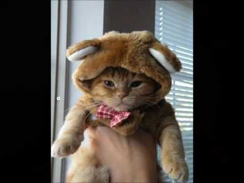 Cute Kittens Wearing Hats Kittens Wearing Funny Hats