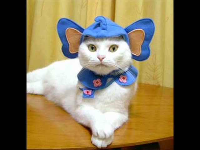 Cute Kittens Wearing Hats ▶ Kittens Wearing Funny Hats