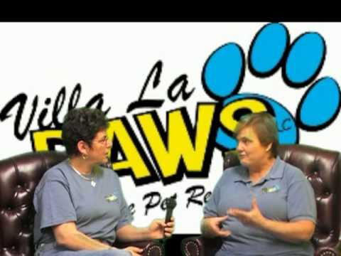 Villa La PAWS - Groomimg - Preparing Your Pet For SUMMER!
