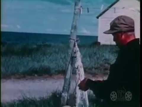 35 second silent film clip of a a man making or repairing a fish net and hauling a load of salmon onto the beach. This film sequence is an excerpt of AAF-96 ...