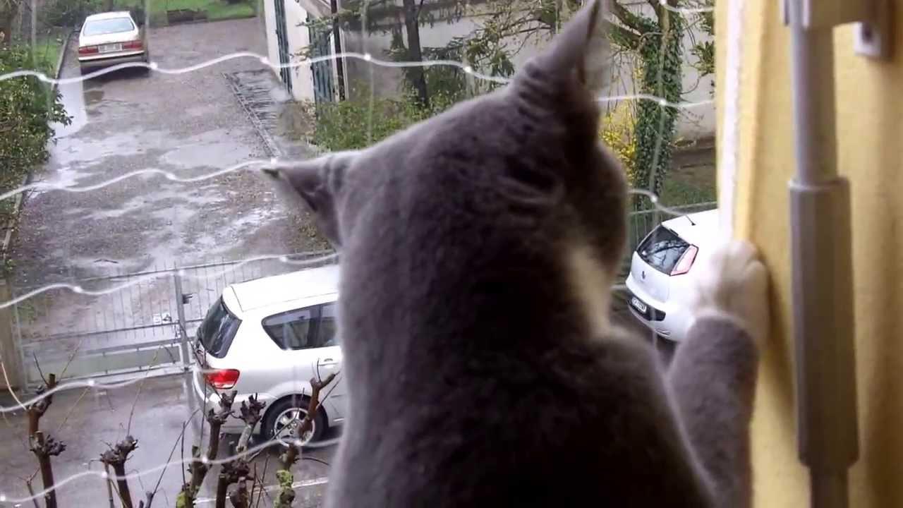 Gattini in sicurezza la rete protettiva sul balcone 1 youtube - Rete per gatti giardino ...