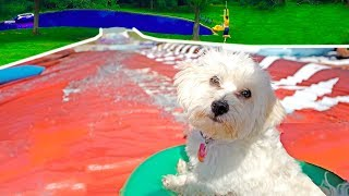 PUPPY GOES DOWN WORLDS BIGGEST WATERSLIDE!!