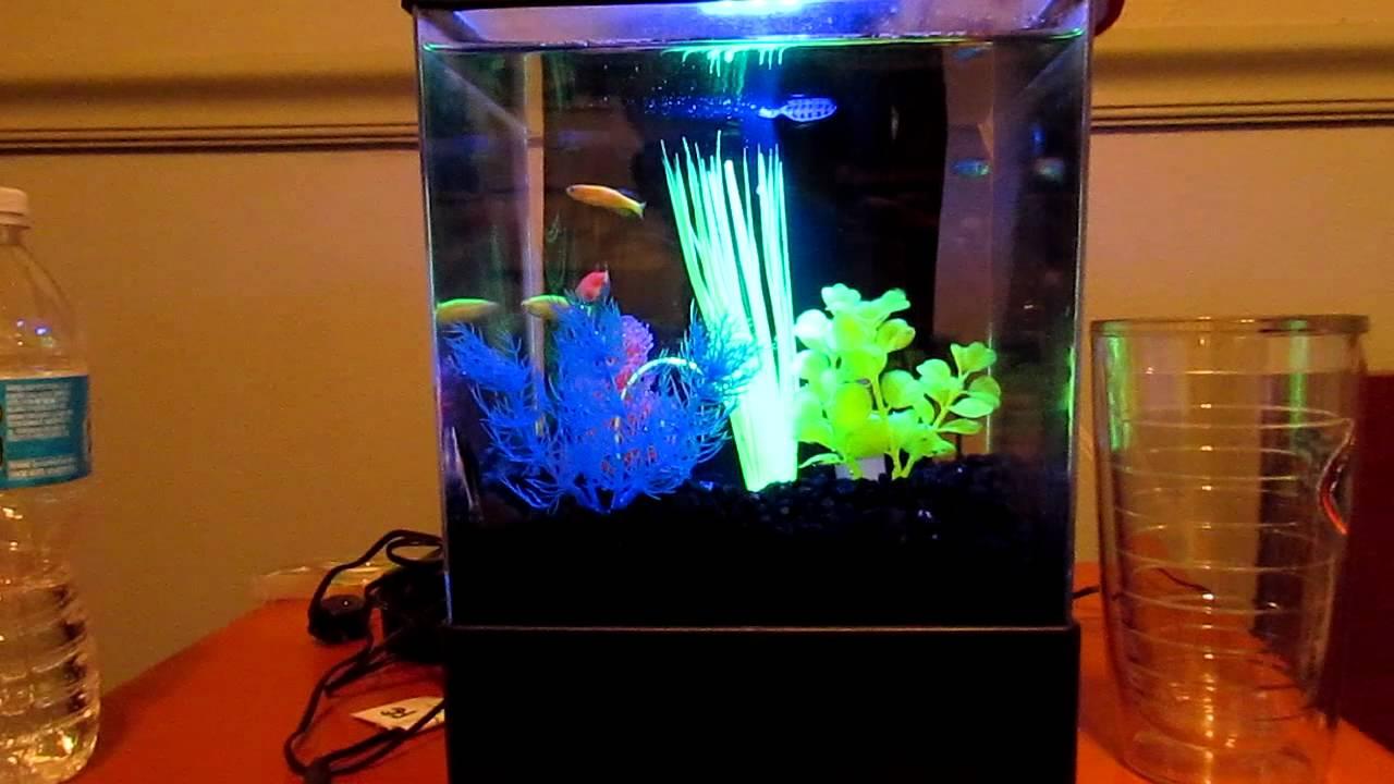 Glofish Tank Update on the g...