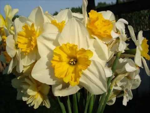 Брамс - В цветущем мае природа