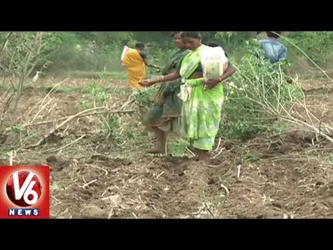 Farmers In Concern With Lack Of Rains In Telangana State | V6 News