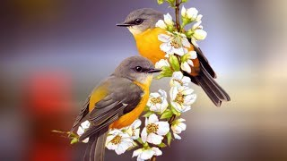"""Peaceful Relaxing Instrumental music, Meditation Quiet Music """" Birds of August"""" By Tim Janis"""