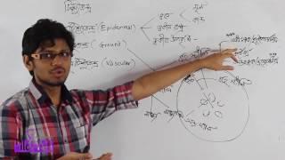 04. Tissue System Part 01 | টিস্যুতন্ত্র পর্ব ০১ | OnnoRokom Pathshala