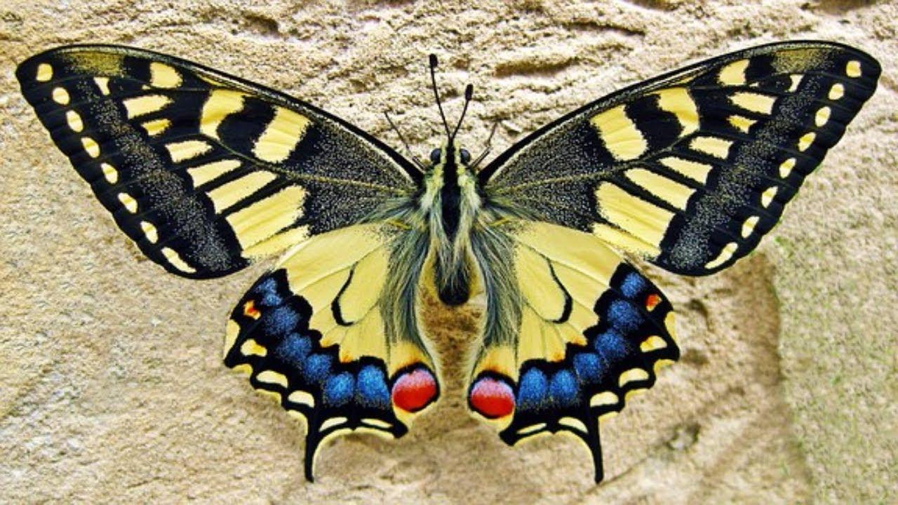 Картинки бабочек фото для детей