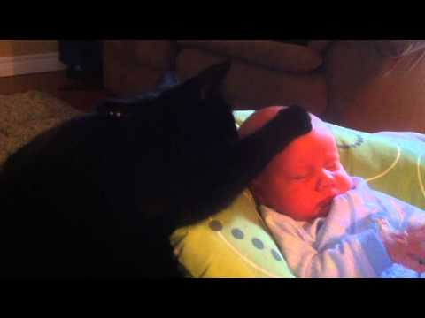 Cat soothing crying baby to sleep - too cute! Music Videos