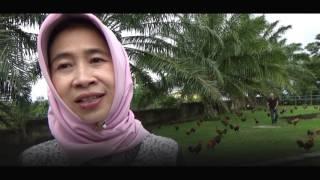 Penggemar Ayam Brugo Bengkulu  Bentuk Komunitas Resmi