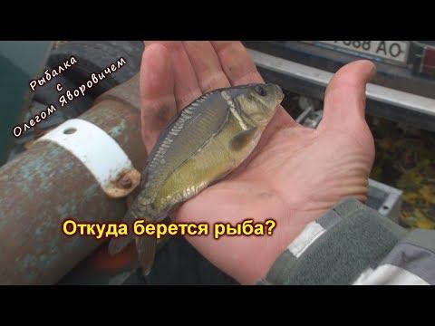 Рыбалка. Много рыбы не бывает. Откуда берется рыба?