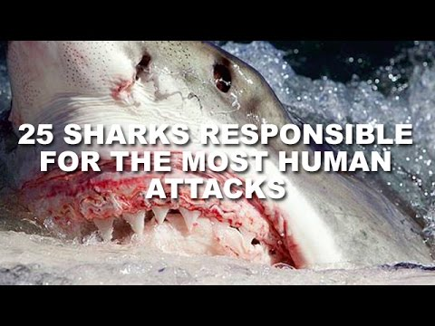 25 Sharks Responsible For The Most Human Attacks