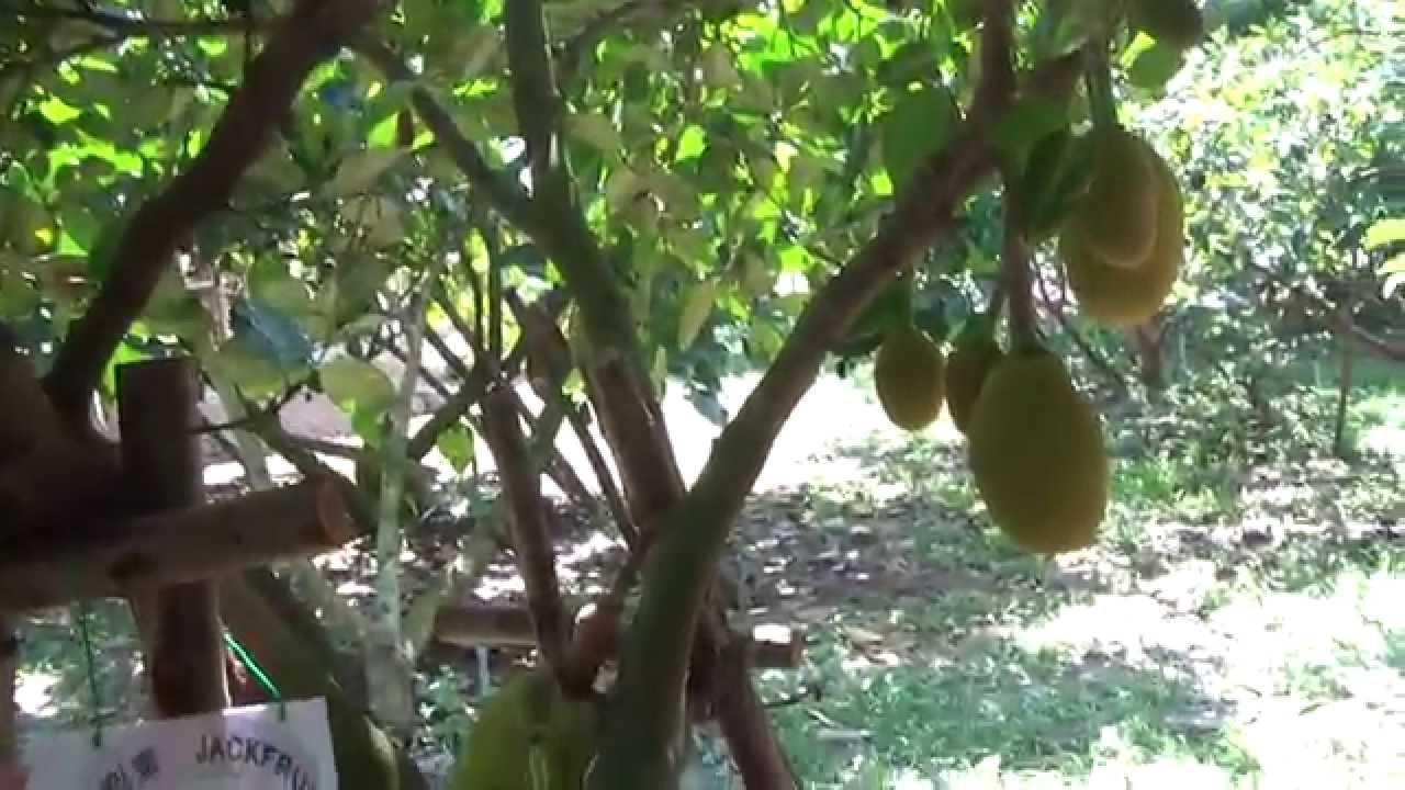 прогулка по саду сады придонья: