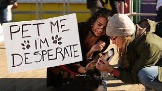 Pet Me I'm Desperate - Corgi Edition