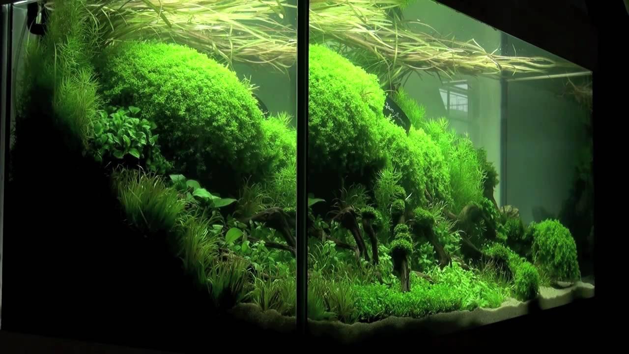 Aquascaping Aquarium Ideas From The Art Of The Planted Aquarium 2011 Part 1 Youtube