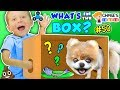 Chase's Corner: WHAT'S IN THE BOX? (#50 | DOH MUCH FUN Challe...