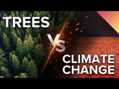 Can Trees Really Fight Climate Change?