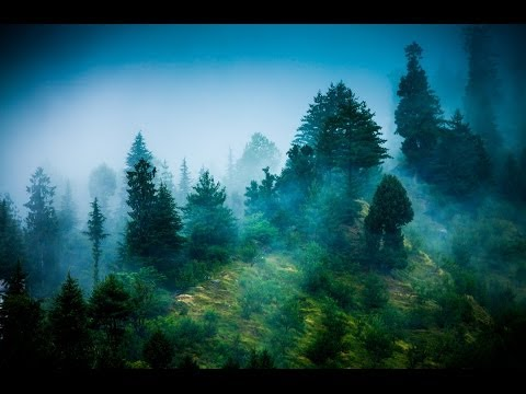 Zen Reiki Meditation Music: Relaxing Instrumental Music For Yoga, Massage, Meditation, Healing ☯071 video
