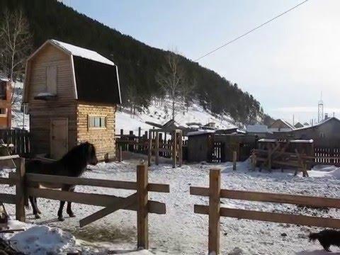 Ландыши - Лошадь