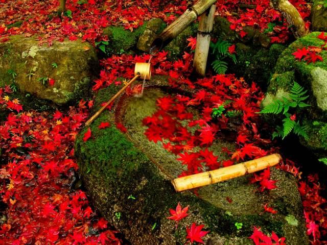 Essences of Fall in Japan -- HD version --