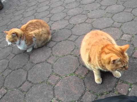 3月11日の地震で揺れてる猫ちゃん達