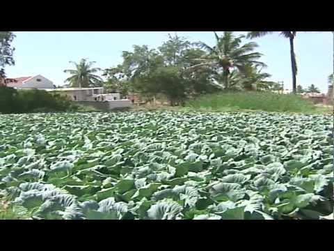 AGRICULTURE INDIA